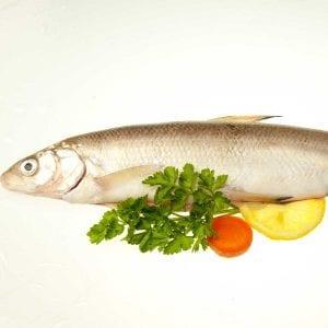 Chiemsee-Renke Frsichfisch im Ganzen
